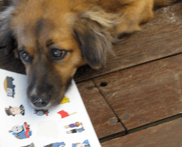 our vacation with mick jagger's dog