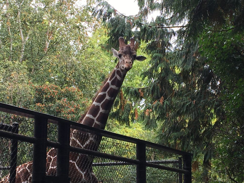Woodland Park Zoo with Kids