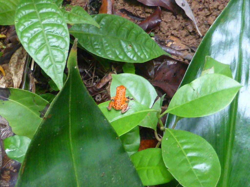 Red Frog Beach - Bocas del Toro
