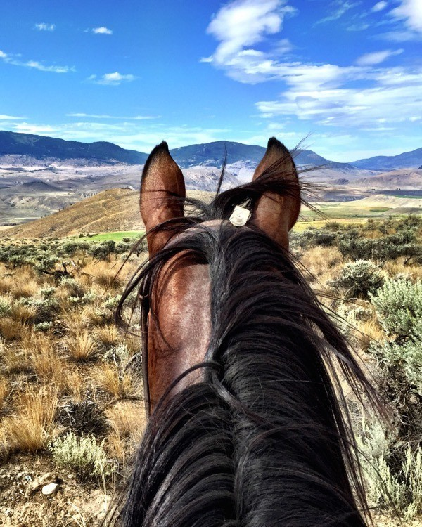 5 Family Friendly Dude Ranches in BC