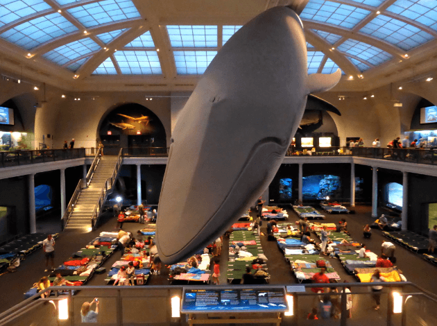 Natural History Museum Nyc Sleepover