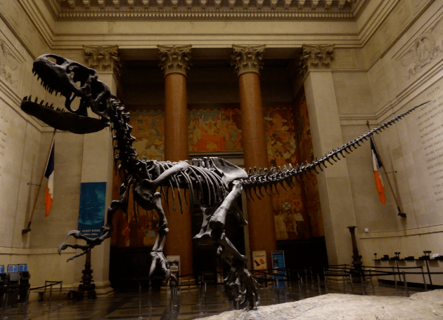 Natural Museum Of History Nyc Sleepover