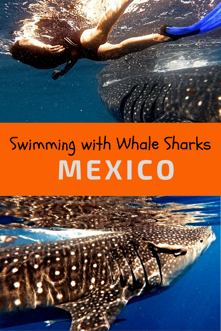 Swimming with Whale Sharks Mexico