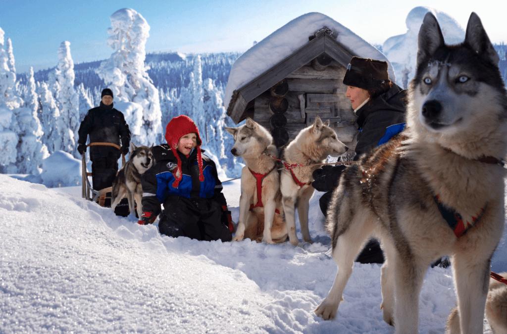 family dogsledding huskies finland