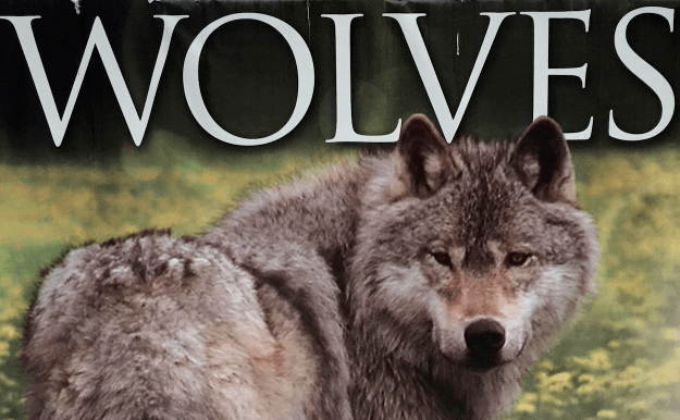the wolves – on canada's powder highway with kids
