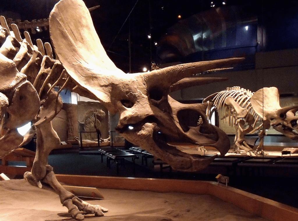 Fossils Drumheller Alberta