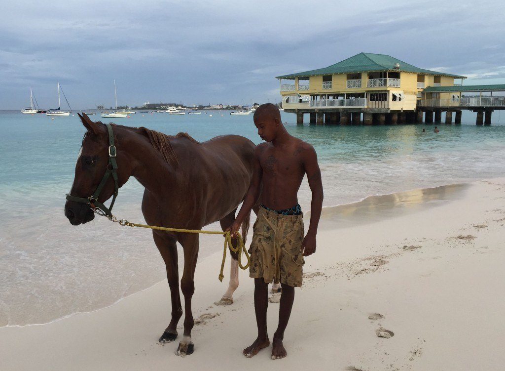 Race Horses Barbados