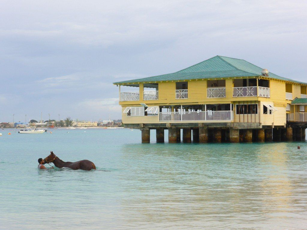 Horses Pebbles Beach Carlisle Bay Barbados