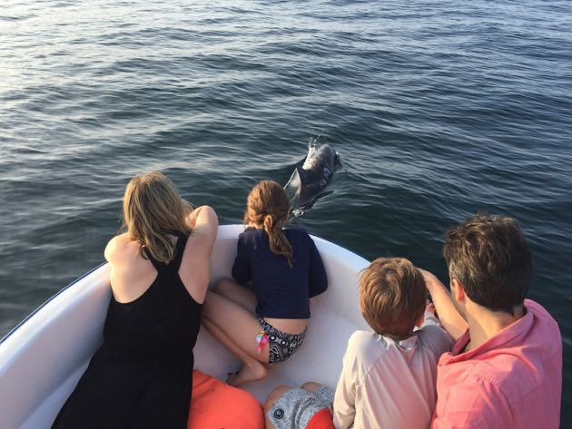 Dolphin Tour Puerto Escondido