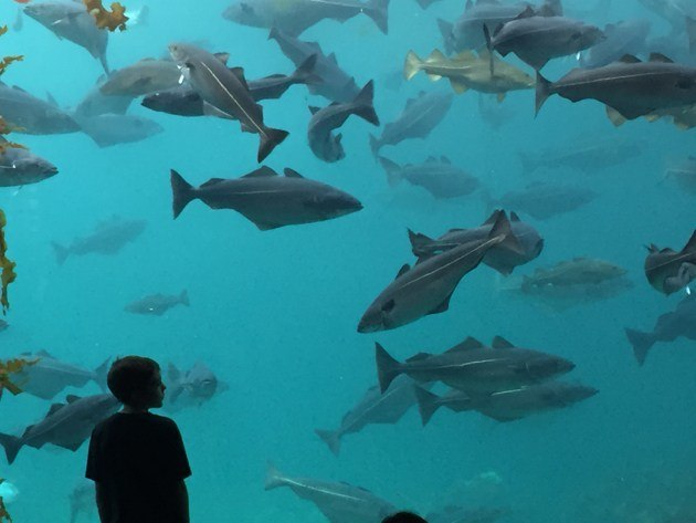 Alesund Atlantic Aquarium - Atlanterhavsparken