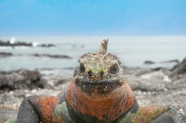 Galapagos Vacation – Cruise or Land Based Island Hopping?