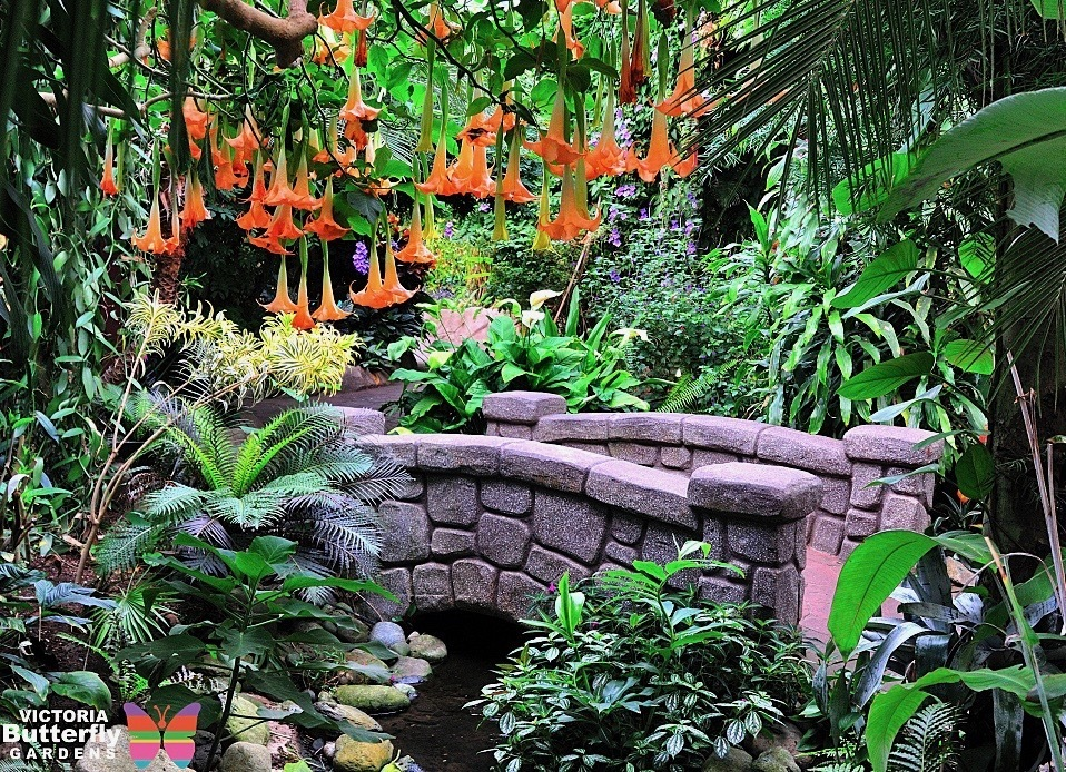 Butterfly Gardens Victoria
