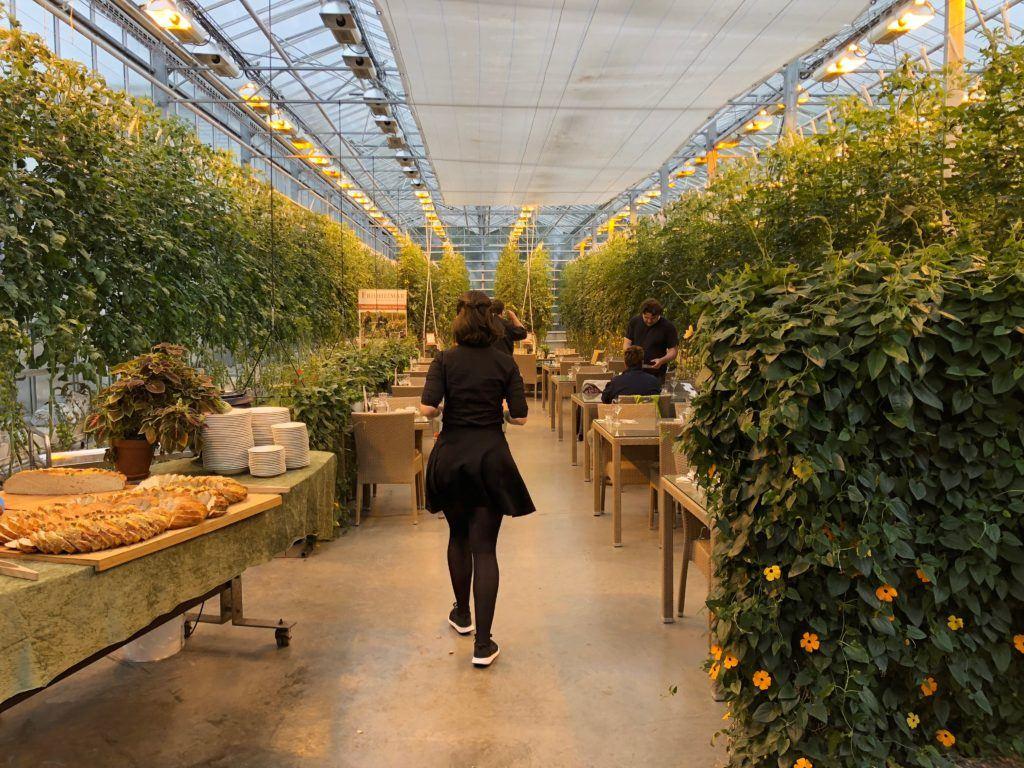 Friðheimar Tomato Greenhouse Iceland