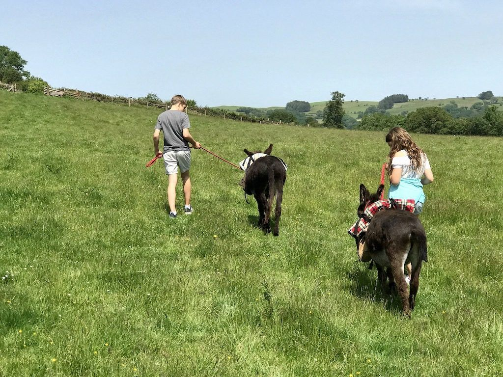 Donkey Walk in Brecon Beacons Wales