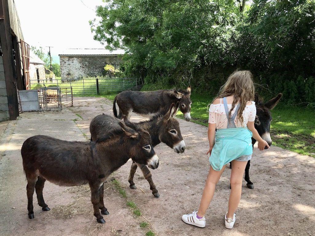 Donkey Walk Wales