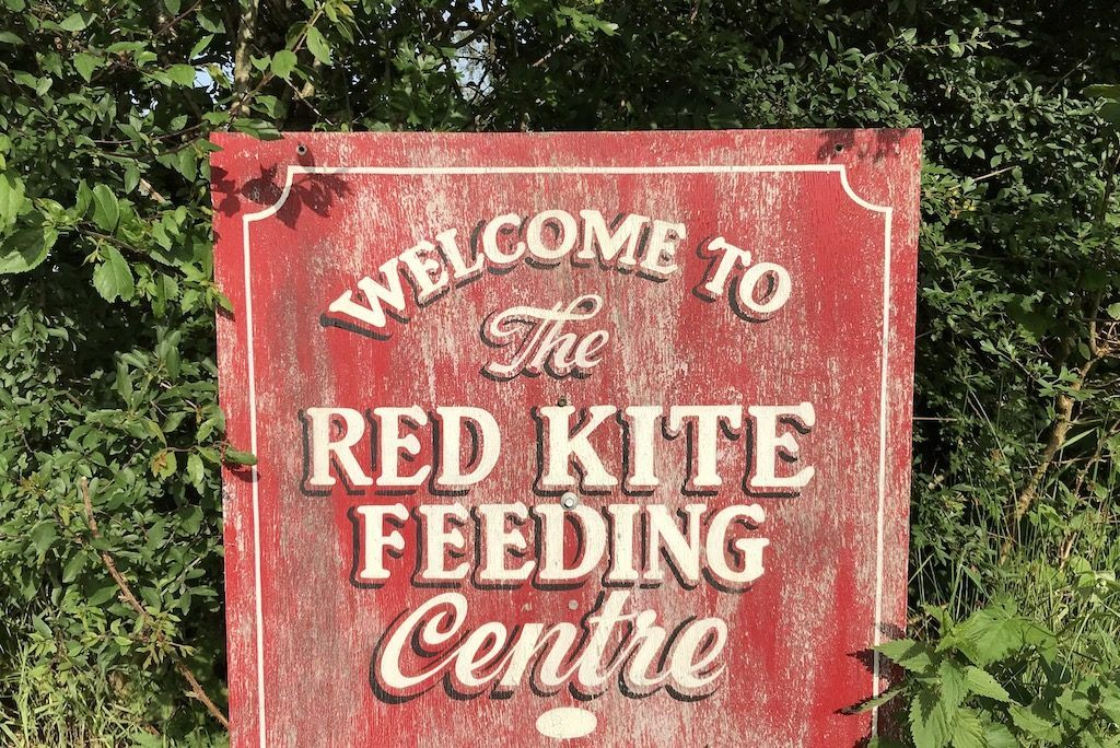 Red Kite Feeding Wales