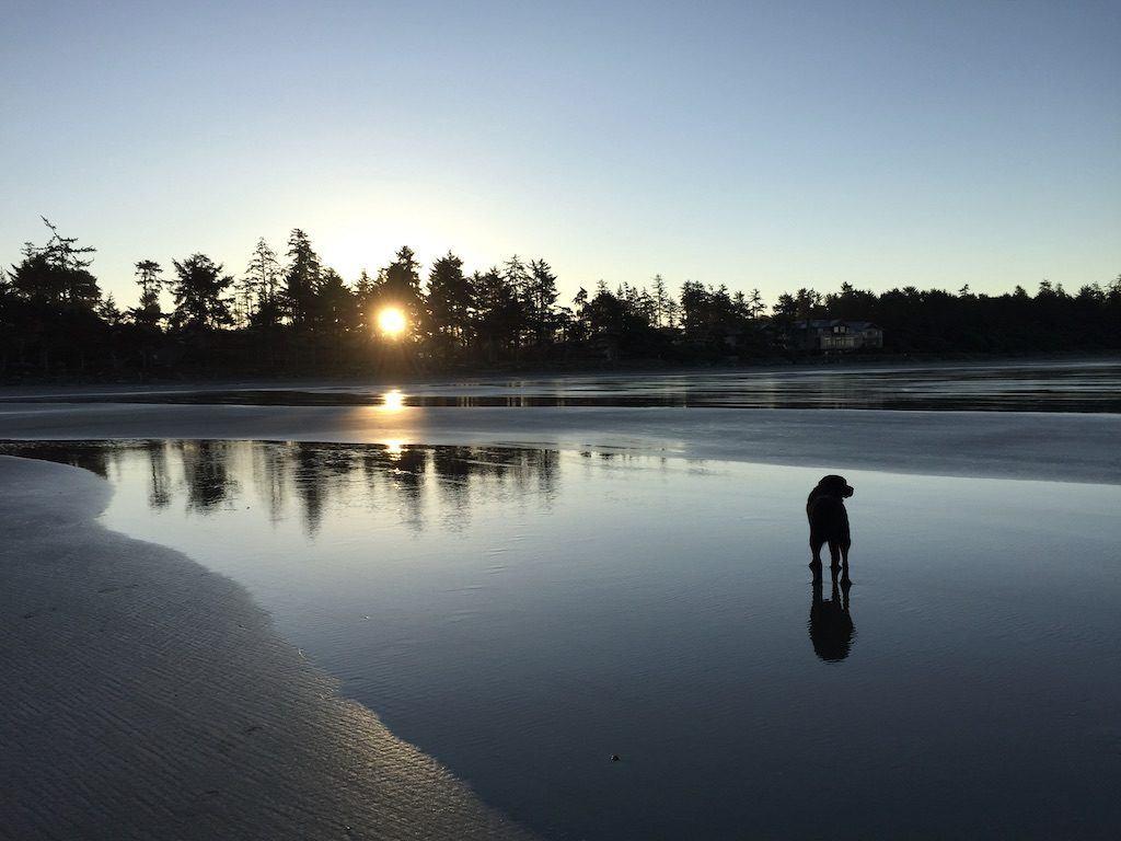 Chesterman Beach Tofino