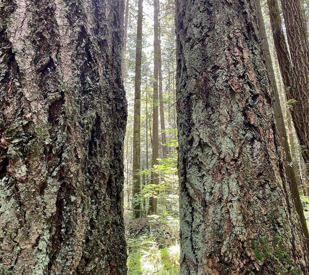 Pacific Spirit Park – Family Hikes Vancouver