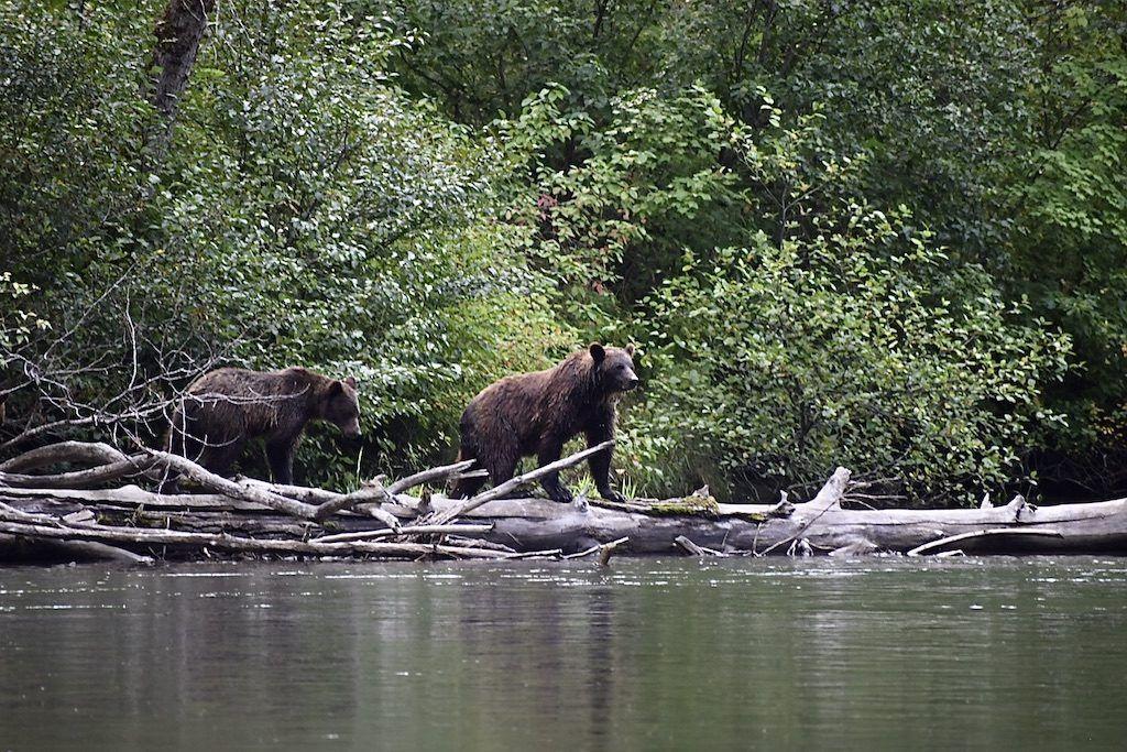 Best Bear Watching British Columbia