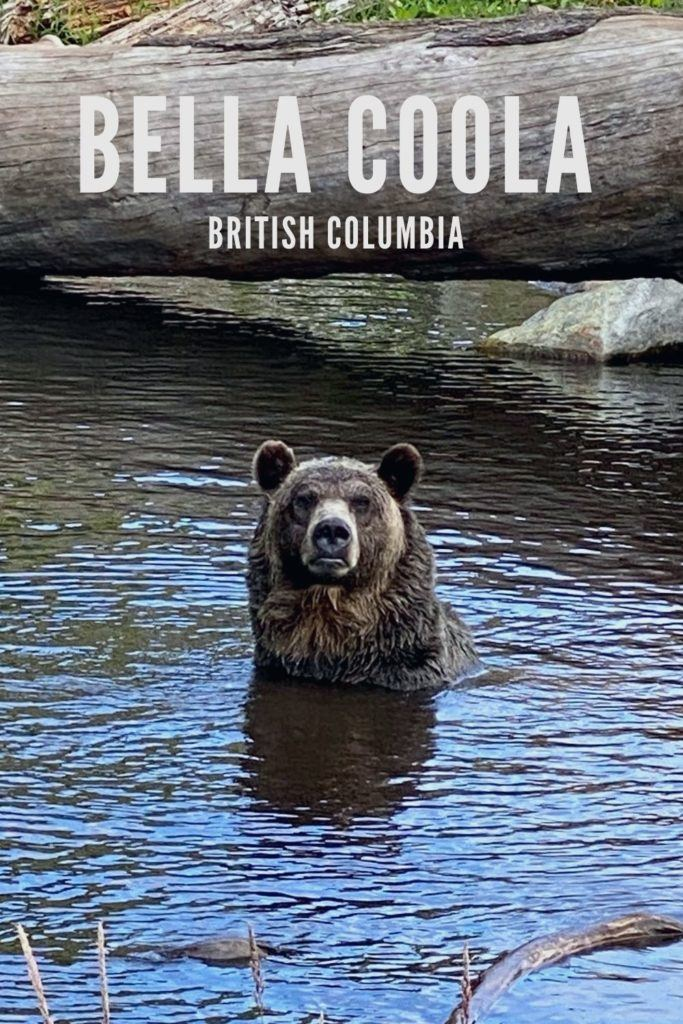 Bella Coola Bears – British Columbia Bear Watching