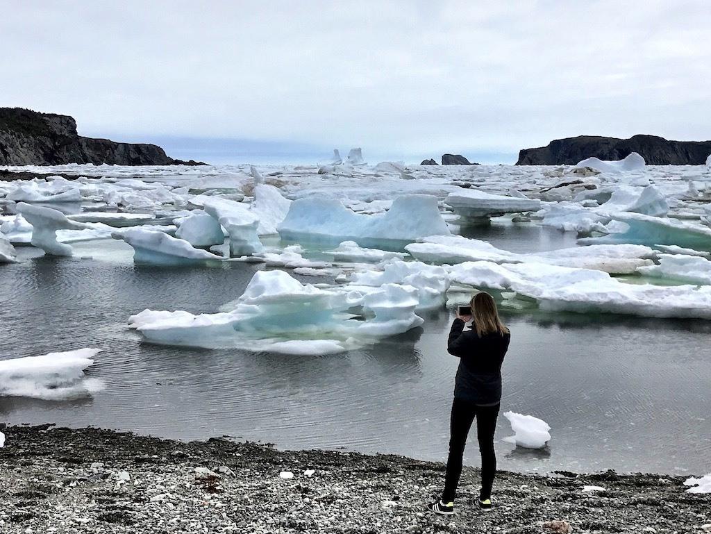 Twillingate Icebergs