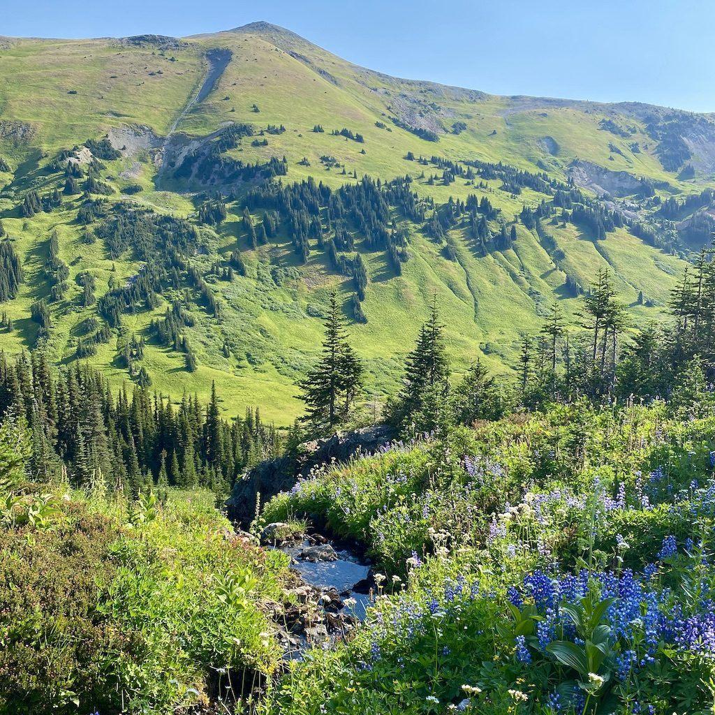 Hiking Whitecap Alpine